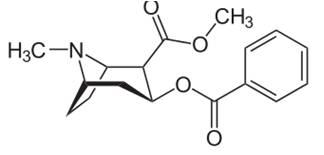 biosintesis hormon steroid pada tumbuhan