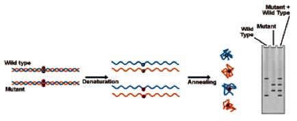 analisis-biomedik-sarmoko