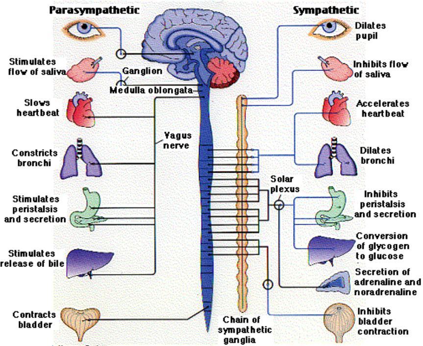 Peringatan dan perhatian penggunaan obat agonisadrenergik